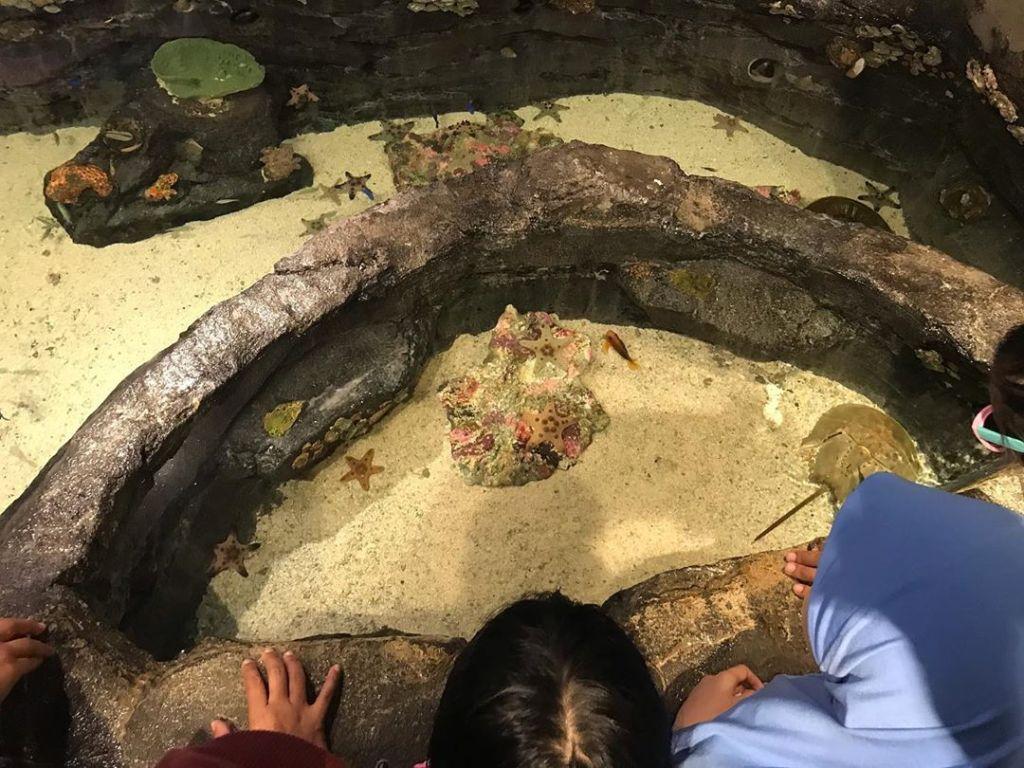 Petting area inside Aquaria KLCC