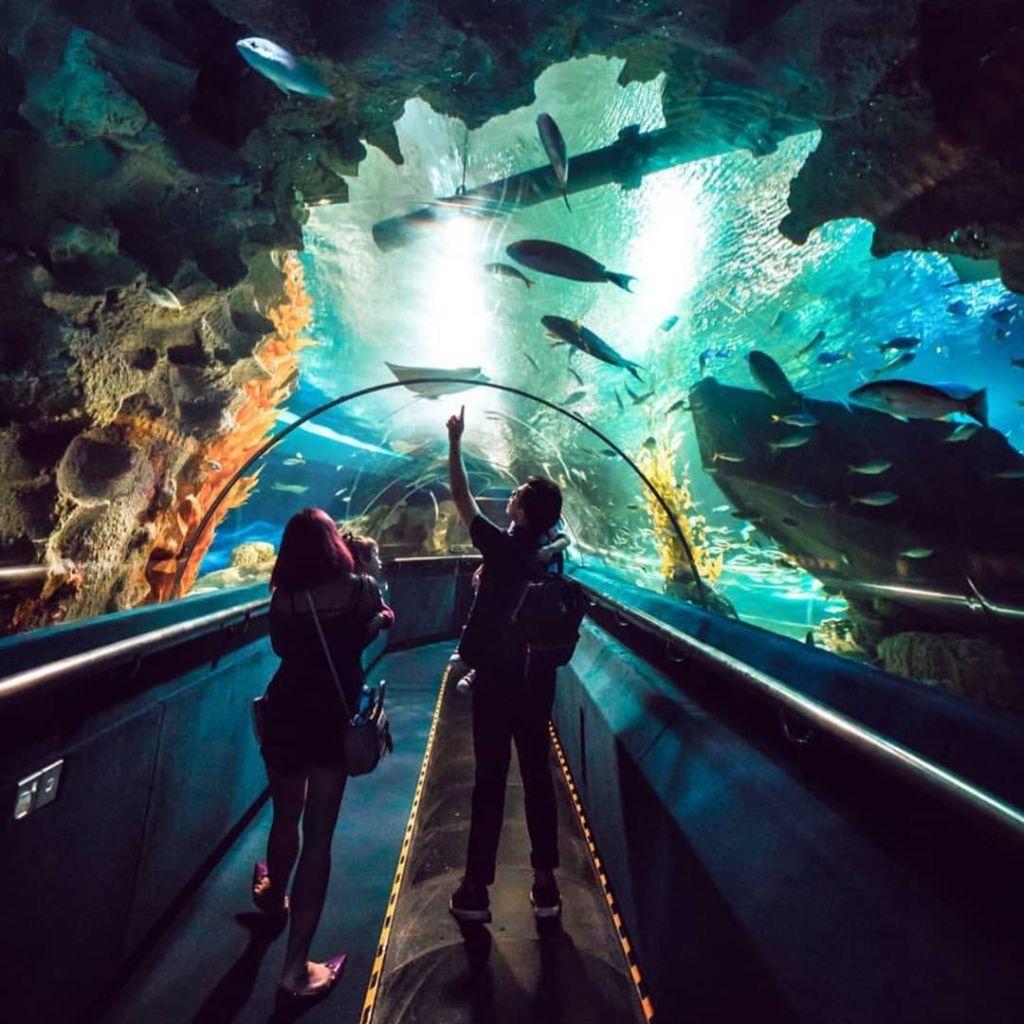 Underwater conveyor belt tunnel inside Aquaria KLCC
